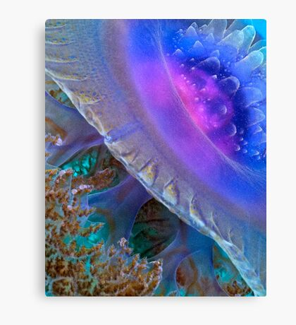Crown Jellyfish Close Up Canvas Print