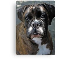 Portrait Of A Female Boxer -Boxer Dogs Series- Canvas Print