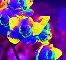 Fantasy Orchids 2 by Margaret Saheed