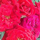 Roses of Red by KazM