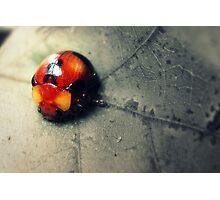 Ladybug Glow Photographic Print