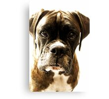 Let Me Tell You A Secret - Boxer Dogs Series Canvas Print