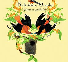 Baltimore Oriole (2005) by Infinite Path  Creations