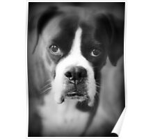 Arwen's Portrait - Female Boxer - Boxer Dogs Series Poster