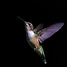 Free - Ruby throated Hummingbird by Jim Cumming