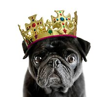 King Humphrey the Pug by Andrew Bret Wallis