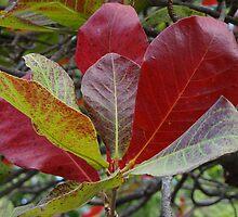 Leaves by Bernhard Matejka