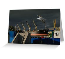 Gull and Baltic sea port in Klaipeda Greeting Card