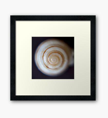 Sea Shells By The Seaside Framed Print