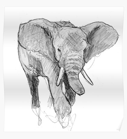 African elephant Poster