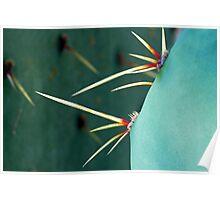 Cactus Macro Poster