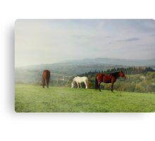 Automanal Horses Canvas Print