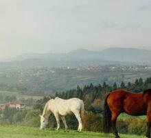 Automanal Horses Sticker