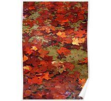 Autumn leaf spektrum Poster