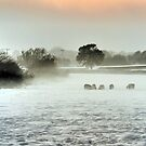 Sheep in a winter mist by JEZ22