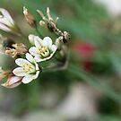 Wild flowers by fourthangel
