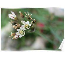 Wild flowers Poster