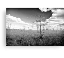 Pond Cypress, Corkscrew Swamp 2011 Canvas Print