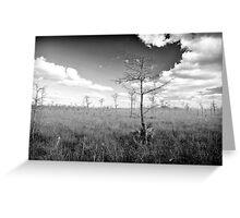 Pond Cypress, Corkscrew Swamp 2011 Greeting Card
