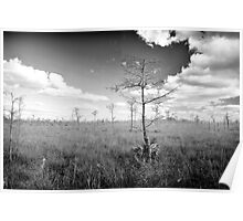 Pond Cypress, Corkscrew Swamp 2011 Poster