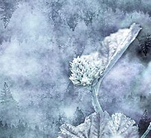 Miraculous Winter by TMTDesigns