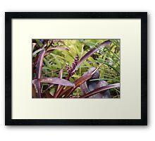 Plant Study by Robert Walmsley Evans Framed Print