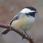 Chickadee by William Brennan