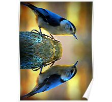 Reflecting Pool Nuthatch  Poster