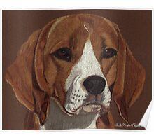 Beagle Vignette Poster