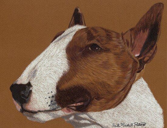 Bull Terrier Vignette by Anita Meistrell Putman
