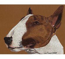 Bull Terrier Vignette Photographic Print