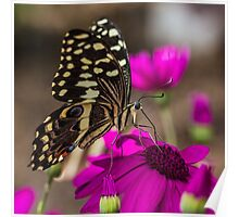 Pretty Black Butterfly on Pink Flowers Poster