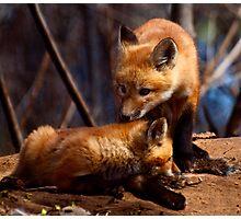 Kit Foxes Photographic Print