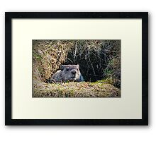 Buck Teeth Framed Print