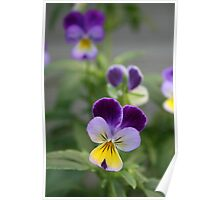 Don't Call Us Pansies Poster