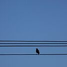 Bird On A Wire - Melbourne by BreeDanielle