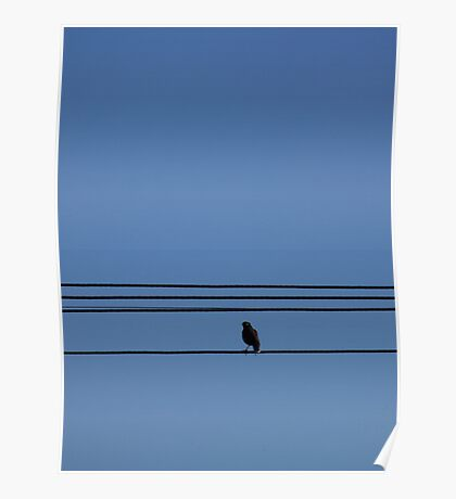 Bird On A Wire - Melbourne Poster