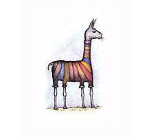 llamas get cold Photographic Print