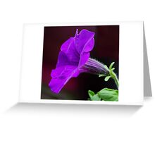 Splash of Mauve Greeting Card