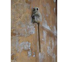 Hidden Indian Monkey Photographic Print