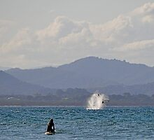 Whale Watching. by Graham  Nixon