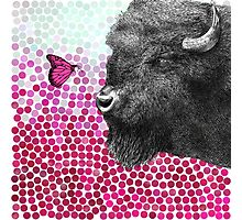 New Friends - Bison & Butterfly Photographic Print