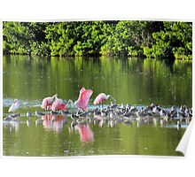 Spoonbills and Plovers Poster