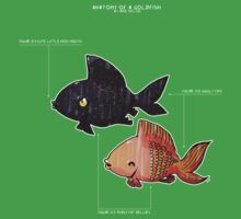 Anatomy of a Goldfish by Amz Kelso