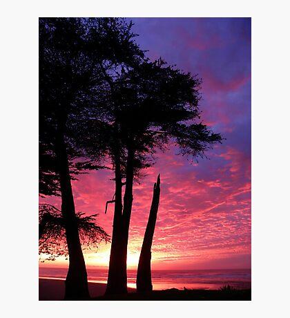 Cypress Sunset Photographic Print