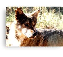 Wolf! Metal Print