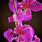 Bright Pink Oncidium Orchids by Renee Hubbard Fine Art Photography