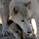Shy Wolves by devinadewi