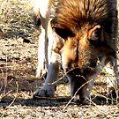 Peek-A-Boo Wolf by devinadewi