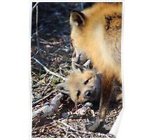 Vixen Grooming Her Pup 1 Poster